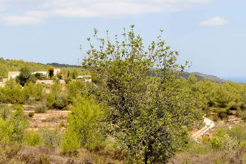 San Miquel_61 - eivipvillas