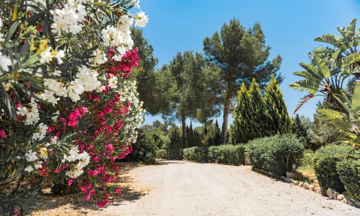 Villa Cult - Garden 4