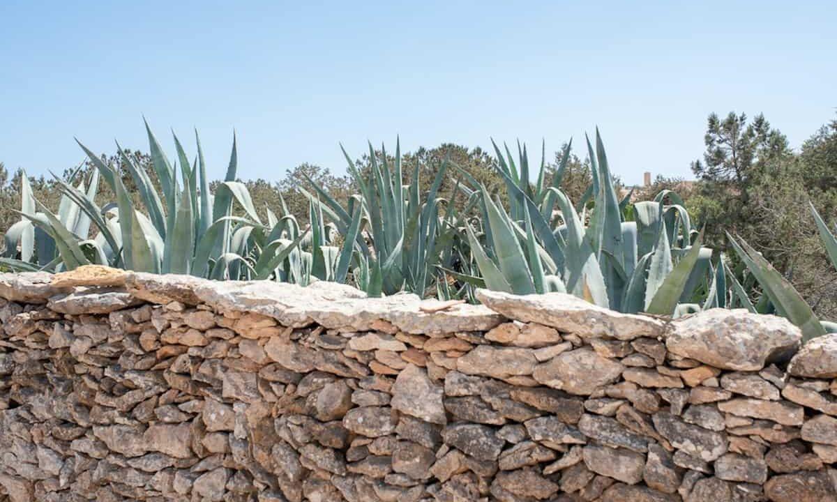 villa-la-cava-formentera-46